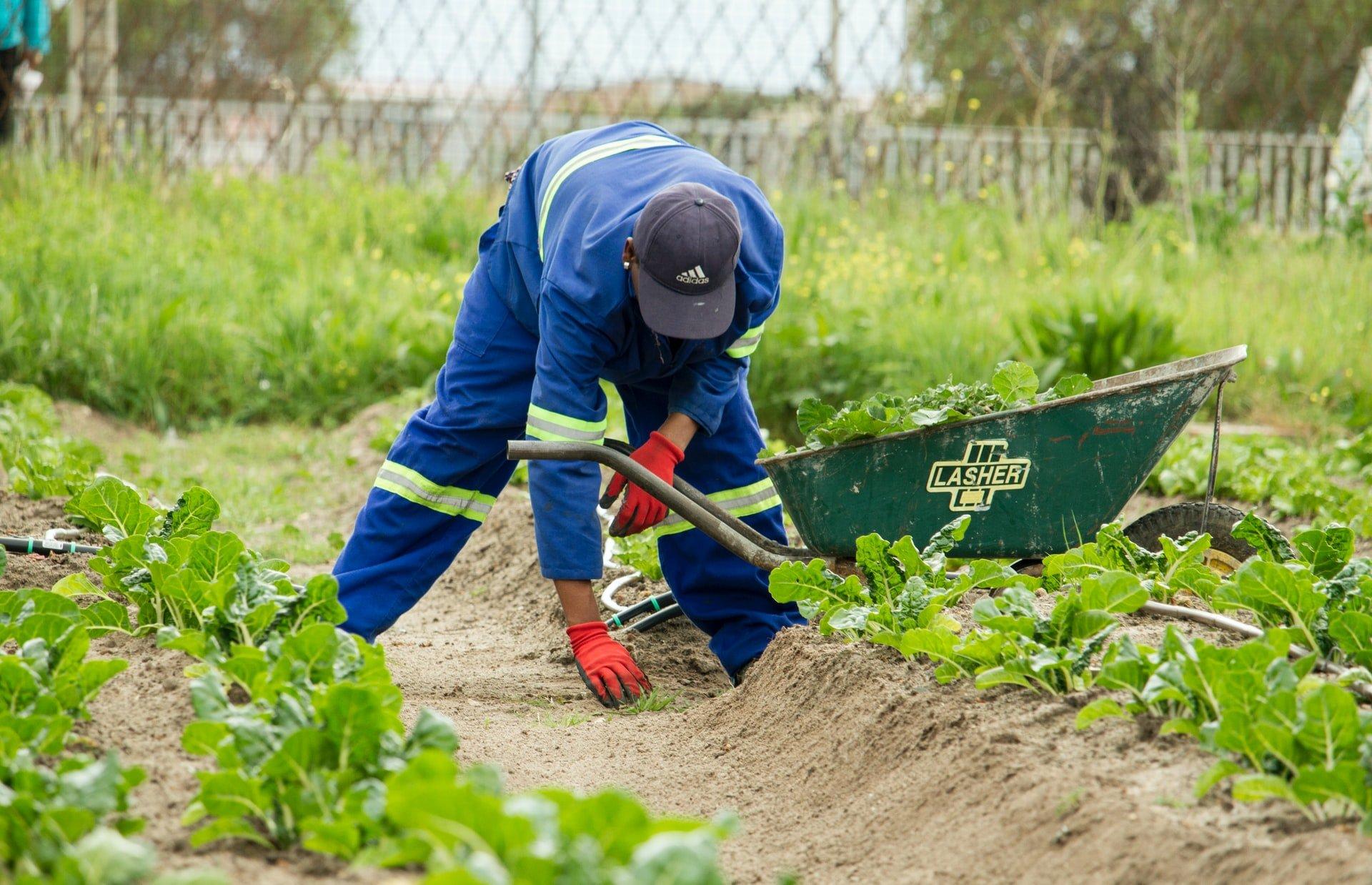 Spenden Sie für die Gärten der Solidarität in Peru!