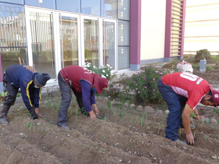 Die Arbeiten in den Huertos Solidarios nehmen weiter an Fahrt auf!